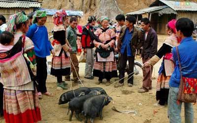 Lợn Cắp Nách – Món Ngon Sapa