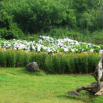Nàng tiên của điểm du lịch Sapa – Núi Hàm Rồng