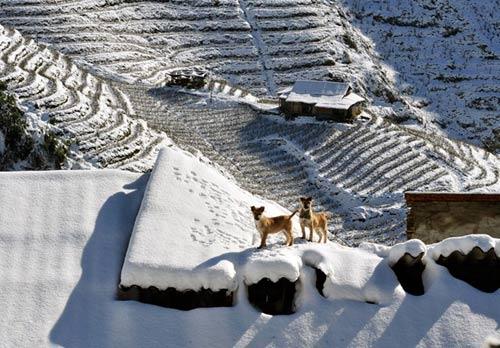Ruộng bậc thang đã trở thành những bậc thang trắng tuyết