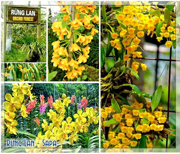 Vườn lan Sapa