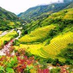 Khám phá vẻ đẹp thung lũng Mường Hoa mùa lúa chín