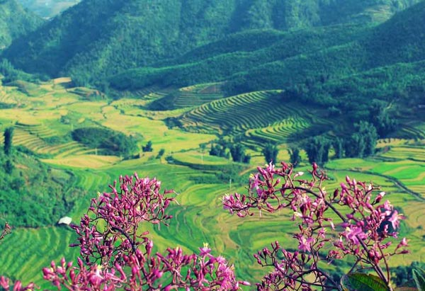 http://dulichsapalaocai.net/wp-content/uploads/2016/03/thung-lung-muong-hoa-sapa-1.jpg
