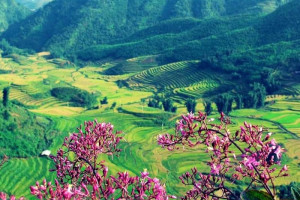 Thung lũng Mường Hoa Sapa