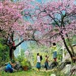 Du lịch Sapa khám phá những thiên đường hoa rực rỡ