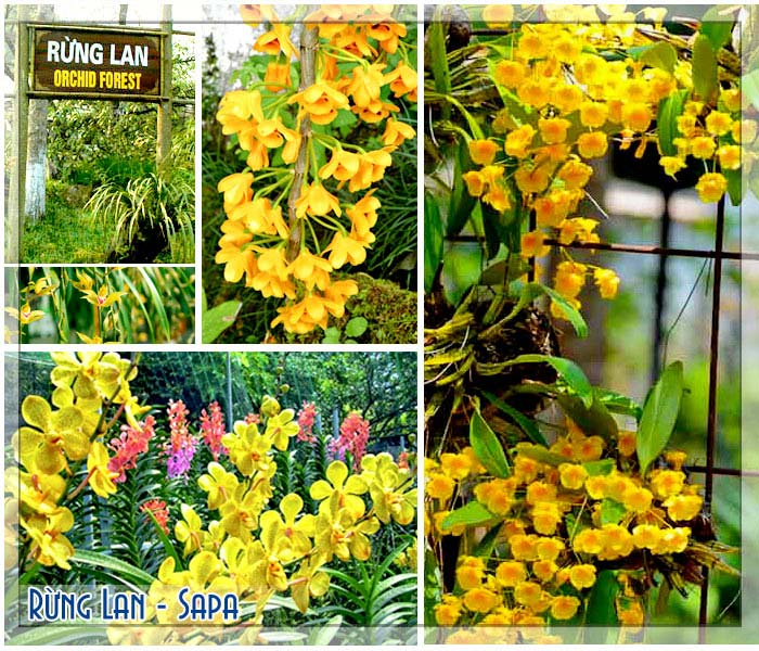 Hoa lan tại vườn lan núi Hàm Rồng