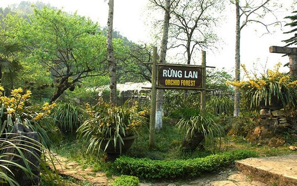 Vườn lan Đông Dương Sapa