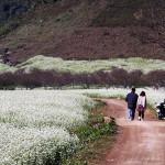 Tour du lịch Mù Cang Chải – Sapa – Điện Biên – Mộc Châu – Mai Châu 5 ngày 4 đêm