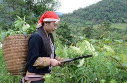 Người dân vào rừng tìm cây thuốc